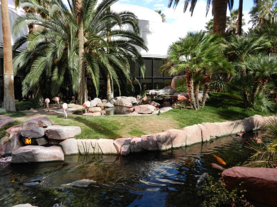 Echte Flamingos in de tuin van het Flamingo Hotel en Casino in Las Vegas.