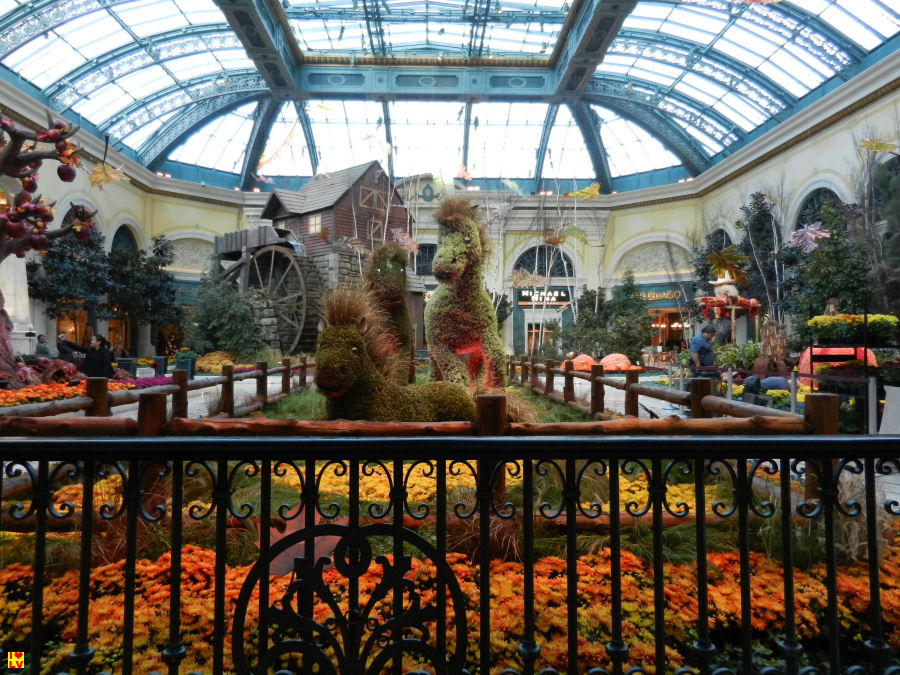 Bellagio Conservatory & Botanical Gardens in het Bellagio Hotel. (Achter de Lobby)