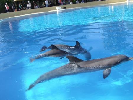 Dolfijnen in het Mirage Hotel